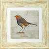 "Irish Garden Birds Robin 9""x 9"", available in 4 frame colours."