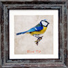 "Irish Garden Birds Blue Tit 9""x 9"", available in 4 frame colours."