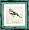 "Irish Garden Birds Chaffinch 9""x 9"", available in 4 frame colours."