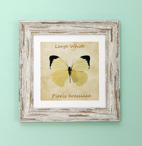"Irish Garden Butterflies Large White Art Frame 9""x 9"""