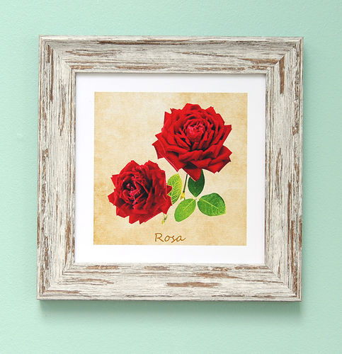 "Irish Garden Flowers Rosa Art Frame 9""x 9"""
