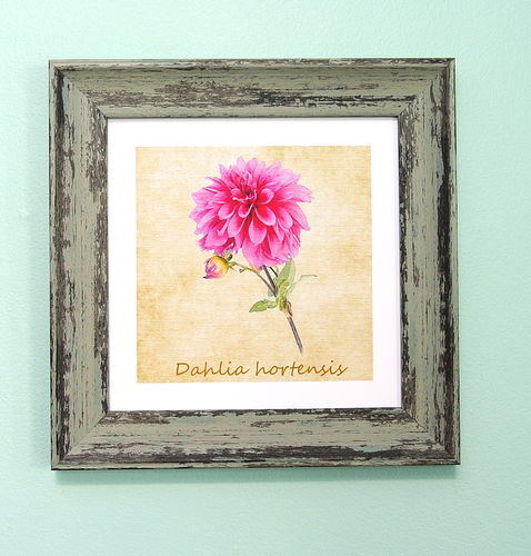 "Irish Garden Flowers Dahlia Art Frame 9""x 9"""