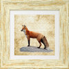 "Irish Wildlife Fox Art Frame 9""x 9"", available in 4 frame colours."